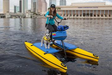 Day Trip Downtown Tampa Water Bike Experience near Tampa, Florida