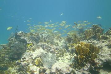 Day Trip Try Scuba Diving near Key Largo, Florida