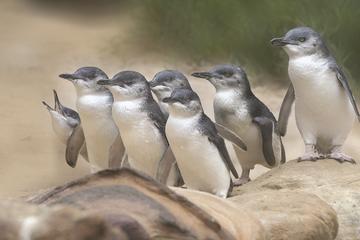 Bonnet Island Wildlife Cruise from Strahan