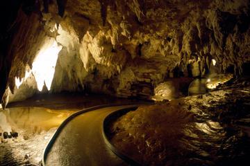 Recorrido de ida de Auckland a Rotorua a través de las cuevas Waitomo...