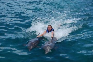 Aventure de nage avec les dauphins à Punta Cana, avec surclassement...