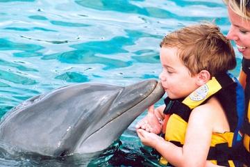 Begegnung mit Delfinen in Punta Cana