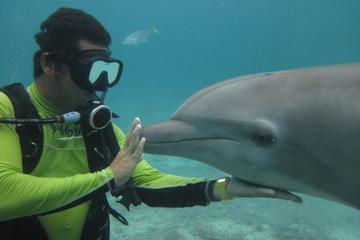 Bucear con los delfines en Cozumel