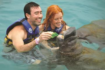 Cozumel Super Saver: Manatees Encounter and Sea Li