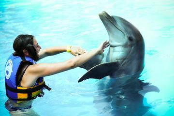 Dolphin Encounter at Aquaventuras...