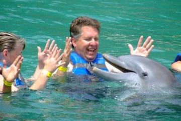 Mergulho real com golfinhos em Puerto Aventuras