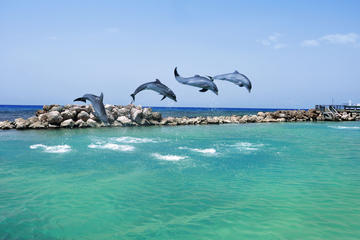 Negril Dolphin Swim Adventure