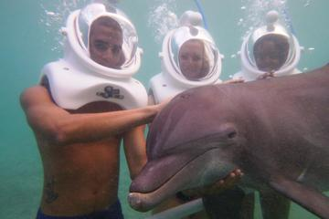 Ocho Rios Dolphin Sea Trek Adventure