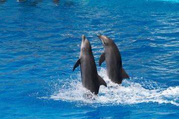 'Tortola Dolphin Discovery Swim' - Schwimmen mit Delfinen auf Tortola
