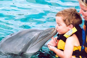 Zwemmen met dolfijnen in Punta Cana