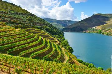 Douro Valley Small Group Tour with 4 Gastronomic Experiences and 3...