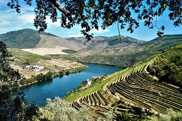 Douro Valley Wine Tour with Lunch ...