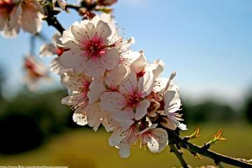 Flowering Almond Trees Small Group Tour with Douro DOC Wine Tasting...