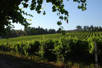 Minho and Vinho Verde Tour with Gastronomic Experiences and Wine...