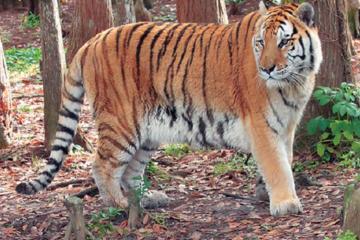 Photo Safari in Big Cat Rescue