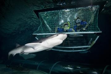 Eintrittskarte für Kelly Tarlton's Sea Life Aquarium