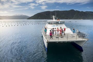 Marlborough Sounds Seafood Cruise...