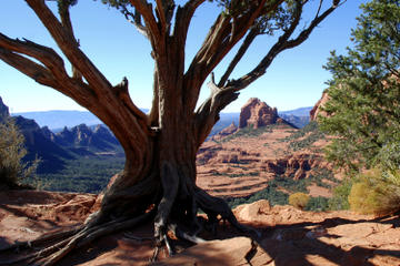 Day Trip Old Bear Wallow Tour from Sedona near Sedona, Arizona