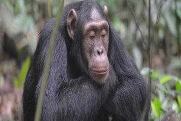 Uganda Kibale Forest National Park