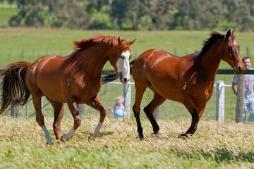 Living Legends Champion Racehorse Guided Tour