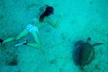 Turtle Swim and Catamaran Tour to Buck Island