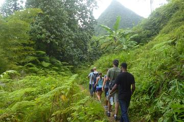 St Lucia Rainforest Hiking Tour