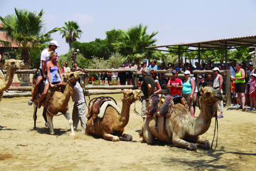 Larnaca Market and Camel Park Excursion from Protaras