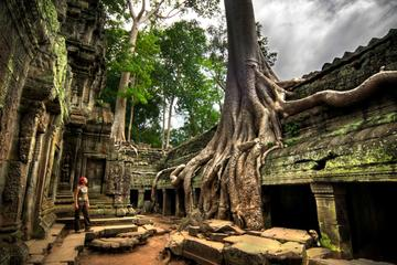 Ta Prohm and Banteay Srei Temples - Private Tour from Siem Reap