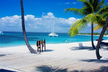 Saona Island Paradise