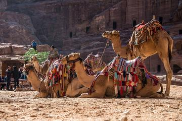 Private Tour from Amman: Petra with Camel Ride