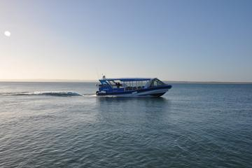 Phillip Island Wildlife Cruise with Optional Penguin Parade and 3...