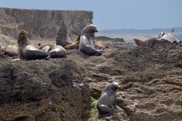 Phillip Island Wildlife Cruise with...