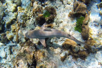 Full-Day Snorkel Trip to Koh Rok and...