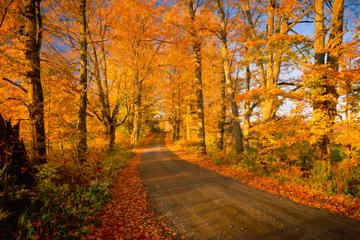 Efterårets farver - sightseeingtur fra Boston