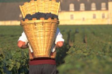 Degustazione di Vino - Regione Côte