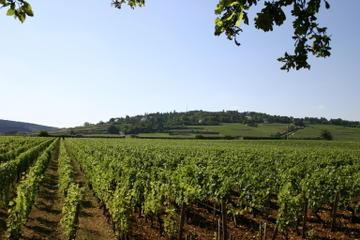 Private Tour: Full Day Wine Tasting...