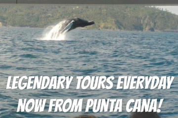 From Punta Cana: Humpback Whales & El Limon Waterfalls National Park