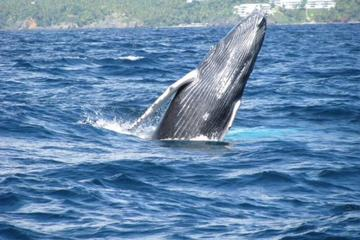 Samana Whale Watching Tour with Biologist Guide