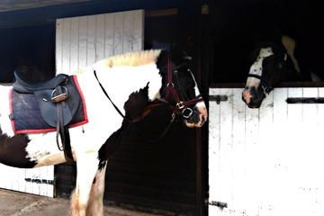 Tynings to Weston-Super-Mare Pony Trekking and Hiking Day Tour from...