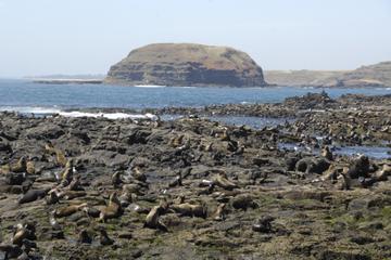 Cruzeiro de observação de focas...