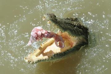 Darwin: Krokodiltour auf dem Fluss Adelaide