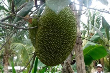 Guayaquil City Tour Including Route of the Fruits and Plantation