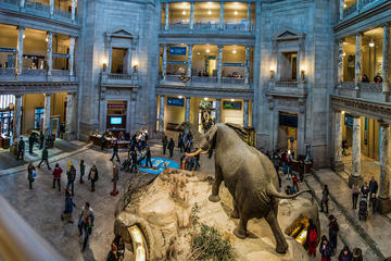 Small-Group Combo Tour: Smithsonian National Museum of Natural...