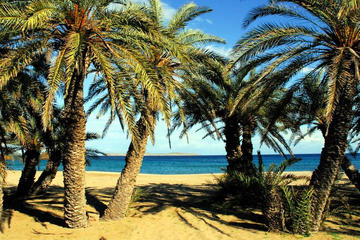 The palm forest of Vai - Adventure Tour