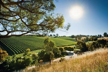 Small Group Adelaide Hills Divine Wine Day Trip from Adelaide