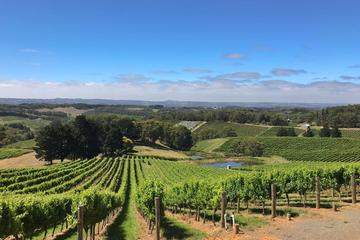 Small-Group Full-Day Adelaide Hills and Hahndorf Wine Tour from Adelaide