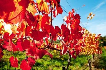 Small Group Gourmet Adelaide Hills and Hahndorf Day Trip from Adelaide