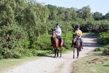 Jamaica Horseback Riding Adventure from Falmouth