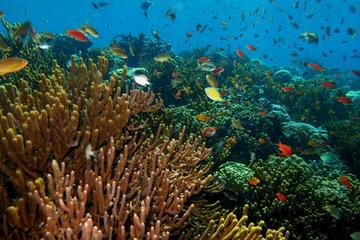 Bali Watersport Packages