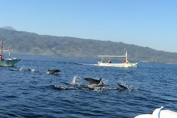Lovina Dolphin Watching  and Temple Tours with Lunch